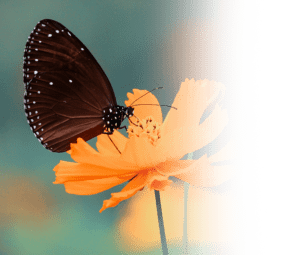 Butterfly on Flower Desktop Quote